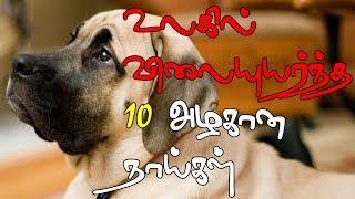 உலகில் விலையுயர்ந்த 10 அழகான நாய்கள் | Expensive dogs in the world | Dog care tamil