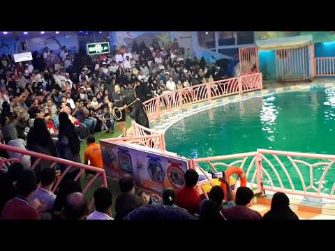 Dolphin village at Dammam (Part-01)