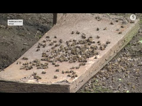 Масова загибель бджіл