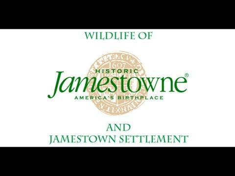 JAMESTOWN WILDLIFE
