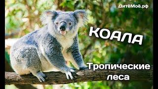 Коала. Мир животных. Энциклопедия для детей.
