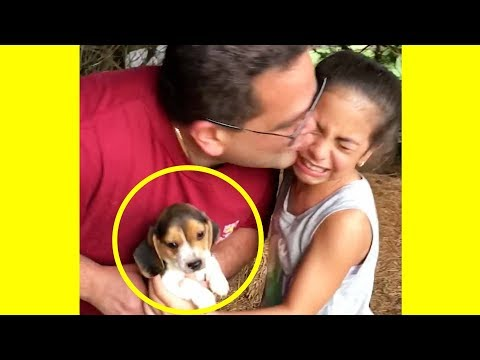 These Families Getting Surprised With ADORABLE Pets Will Make You Happy!