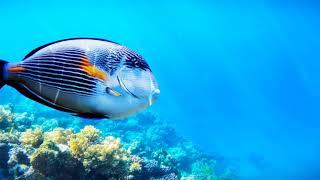 3D-анимация рыбы