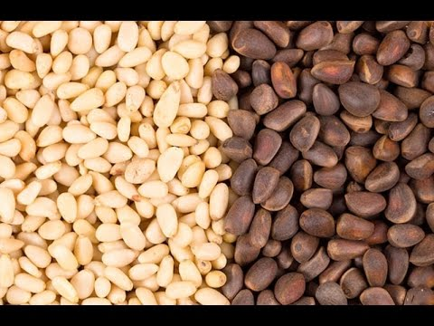 Кедровые орехи: польза и противопоказания