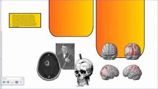 The Human Brain Part 1 IB Biology