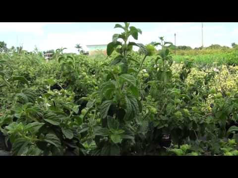 We buy plants - Florida-friendly landscaping in Miami-Dade County!