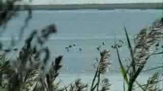 Курортный город Приморско-Ахтарск(Клип о курортном городе Приморско-Ахтарске, изображения пляжей, улиц, Азовского моря., 2008-08-18T14:48:35.000Z)