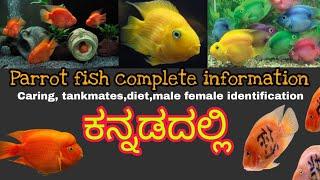 Blood parrot ಮೀನಿನ ಸಂಪೂರ್ಣ ಮಾಹಿತಿ  caring,diet,tank mates,tank setup, breeding Mathsya jagattu