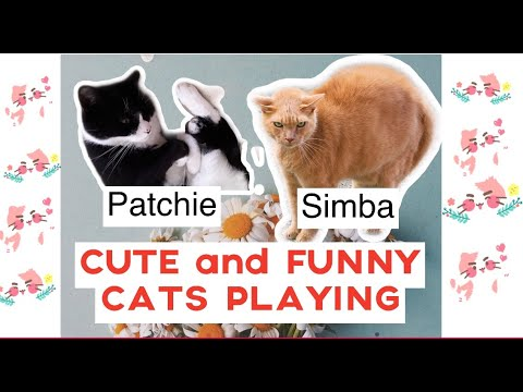 CUTE AND FUNNY CATS PLAYING