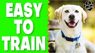 Easy To Train Dog Breeds