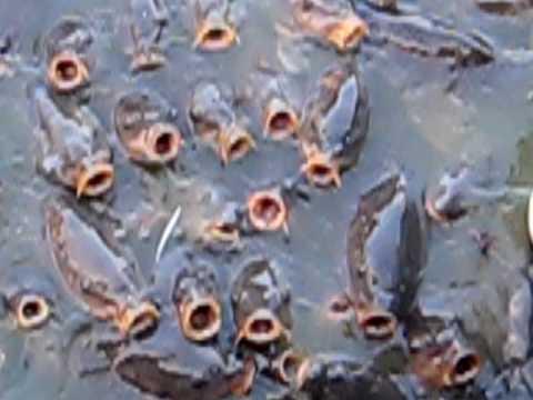 Creepy, Hungry Fish