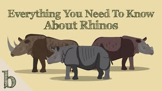Everything You Need To Know About Rhinos | Wildlife Animation