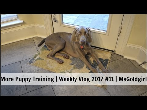 More Puppy Training   Weekly Vlog 2017 #11   MsGoldgirl