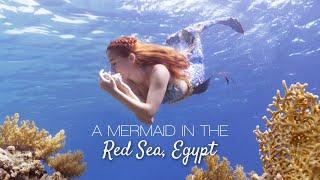 Lexie Mermaid - A Mermaid in the Red Sea, Egypt