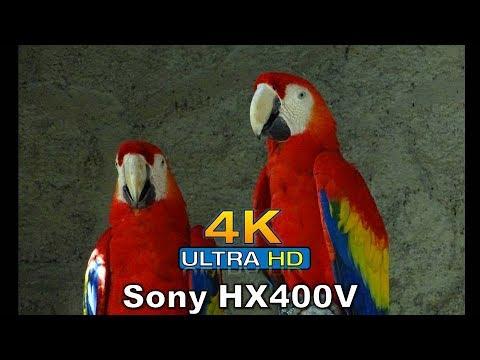 4K –Sony HX400V Sample Pictures at El Salvador's Zoo – El Salvador 4K (El Salvador impressive)