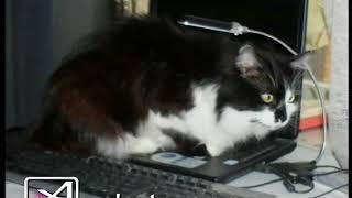 Кот долгожитель