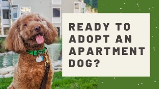 What I wish I knew before adopting a dog while living in an apartment  Considerations and tips