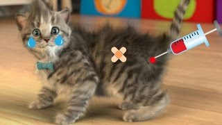 My Favorite Cat Little Kitten Pet Care  and Children Play Cat Care Games for Baby Toddlers