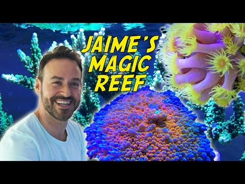 Jaime's Eclectic Community Reef, Australia Tour Part 7