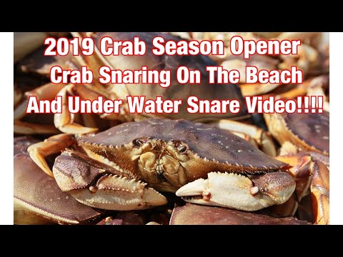 2019 Dungeness Crab Season Opener/ How To Catch Dungeness Crab / Under Water Go Fish Cam Video