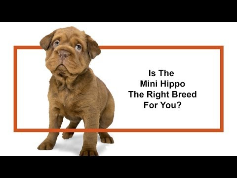 Learn all about the Mini Hippo and why they could be your perfect pet!