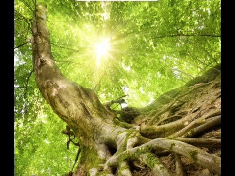 Being Rooted 1: Rooted in Faith
