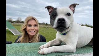 THE STAFFORDSHIRE BULL TERRIER  FIGHTING DOG TO CHAMPION?