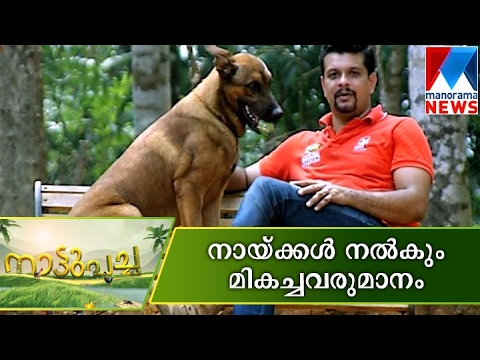 Dog breeding become good income source | Nattupacha  | Manorama News