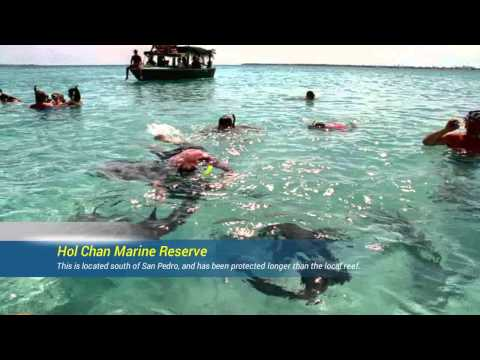 A Traveler's Guide to Everything in Ambergris Caye Belize
