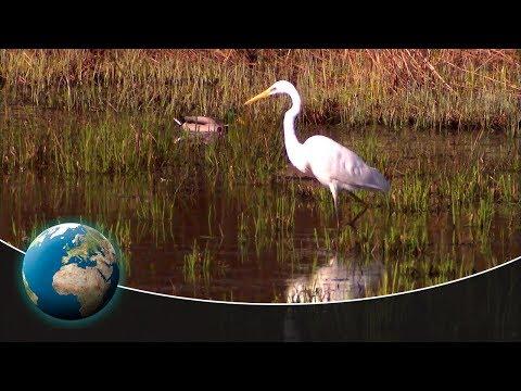 The wonderful world of birds