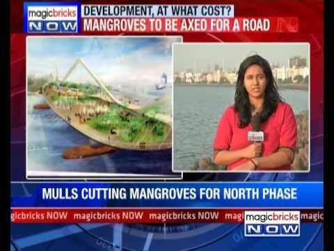 Mangroves to be axed for Coastal road in Mumbai- The News