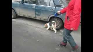 Собака тянет поводок? Не проблема!