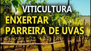 Repeat youtube video Enxertia de mudas, como fazer, uvas, pêssego, jabuticaba e outras plantas, qualidade de vida