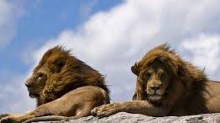 Дикая Африка животный мир Самые опасные животные