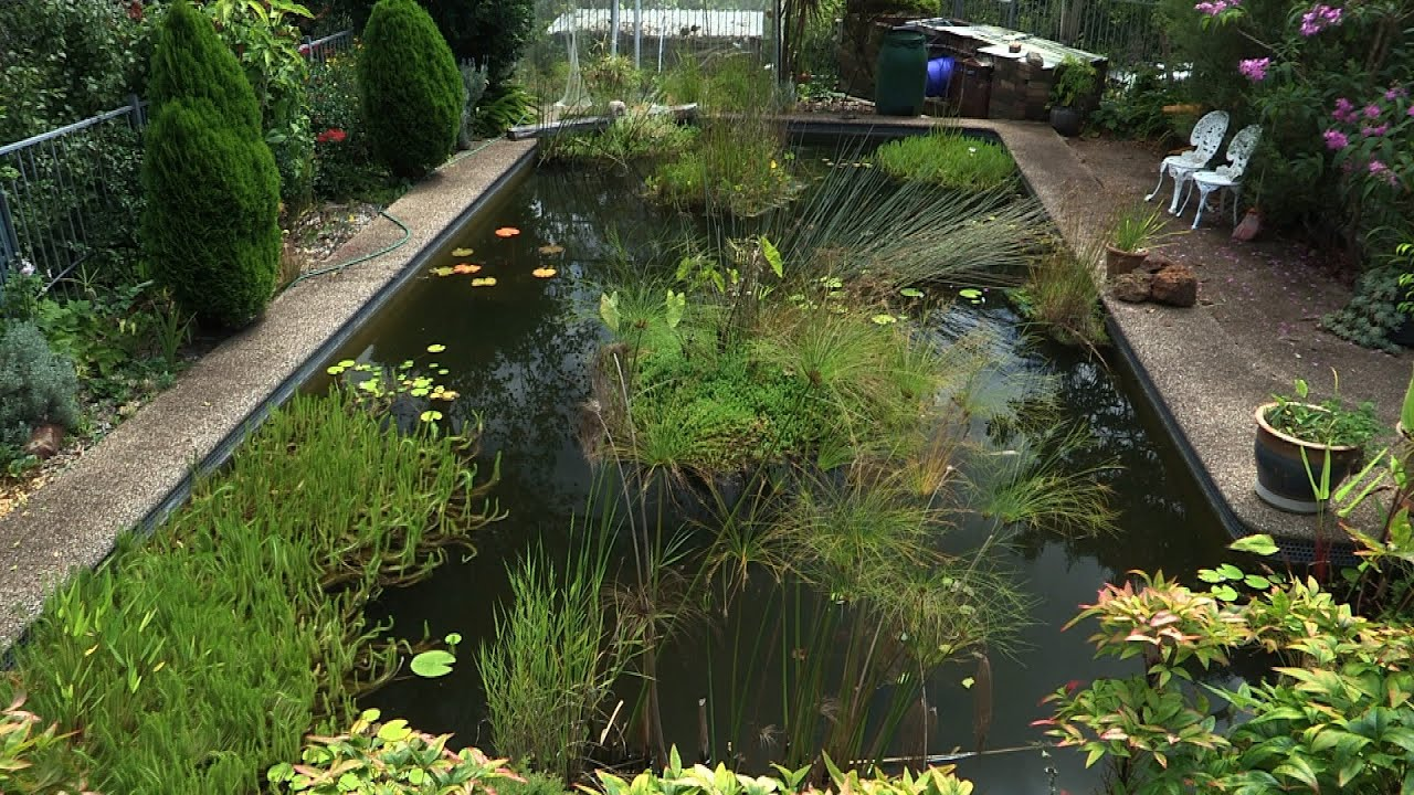 Building a Natural Pond from a Swimming Pool - Ep 4 - YouTube