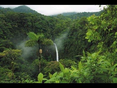 ये है दुनिया का सबसे खूबसूरत और बड़ा जंगल