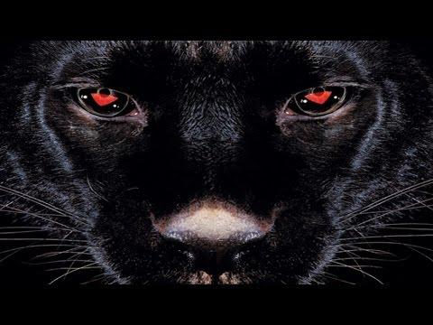 Youtube: Assassin«Esclave 2000» – Touche D'Espoir