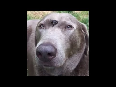 Gentle doggy lets tiny tree frog sit on his head