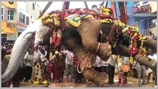 elephant funeral   Elephants in ceremonies