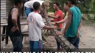10 Terrifying Snakes That Actually Exist thumbnail