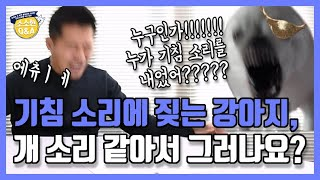 [Eng sub]My dog barks at coughs It is because it sounds like barking? |Kang Hyong Wook's Q&A