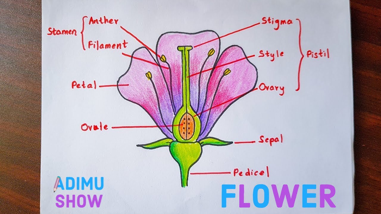 How To Draw And Label A Flower Step By Step Tutorial Youtube Parts Of A Flower Flower Step By Step Flower Science