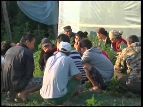 В Краснодаре усилят контроль за незаконными мигрантами
