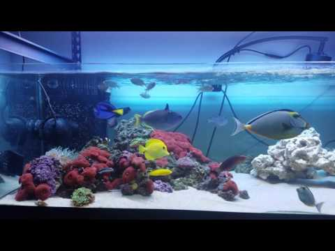 Cleaner wrasse cleaning station