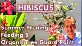 HIBISCUS CARE: Summer Pruning| Feeding | Organic Tree Guard Paint