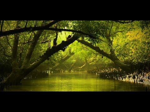Sundarban Of Bangladesh I সুন্দরবন