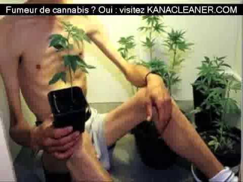 astuce pour faire pousser de l'herbe de cannabis chez soi - youtube