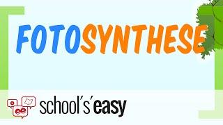 Fotosynthese - Photosynthese - Wie geht das?