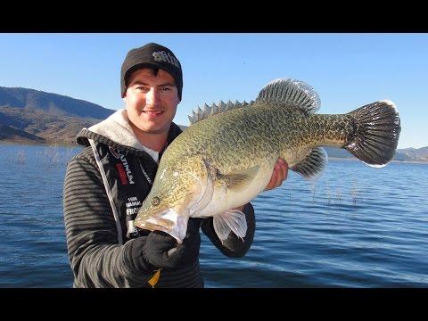 70cm Blowering Cod