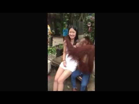 ลิงจับนมสาวสวย